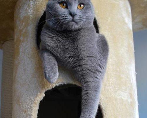Vanilla Blu Ardoisetambre